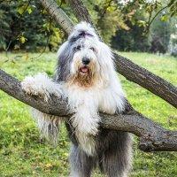 Маня на дереве :: Лариса Батурова