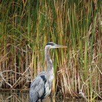 Канадские птицы :: Julia Vito