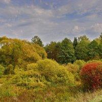 Осень. :: Валера39 Василевский.