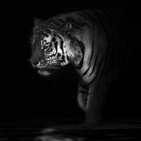 Призрак и тьма... :: олег