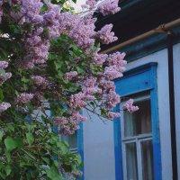 Сиреневое настроение :: Анастасия Акатьева