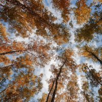 Осеннее небо :: Максим Рублев