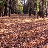 Облетает листва, рыжий в парке ковер настилая :: Татьяна Ломтева