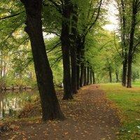 Аллея в осень :: Вера Моисеева