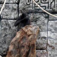 Остров обезьян - 3 :: Наталья Пендюк Пендюк