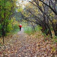 В лес :: Александр Садовский