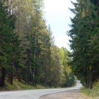 Лесная дорога :: Вера Щукина