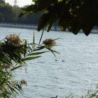 Природа и город... :: Тамара (st.tamara)