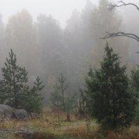 Туман... :: Ljudmila Korotkova