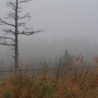 Осень жизни... :: Ljudmila Korotkova