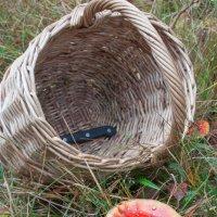 в поисках грибов :: Мария Surveyor