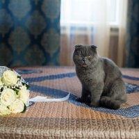 Злой котик :: Ирина Матюхина