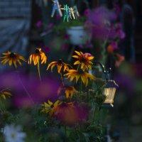 Цветы и прищепки. :: Родольф В.