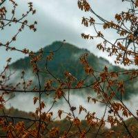 горы в природной рамочке :: Svetlana AS