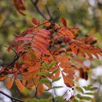 Осенние краски :: Aнна Зарубина