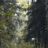 Потаенный лес 2 :: Евгений Ярдов