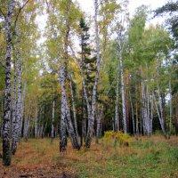 Лесные красоты. :: Мила Бовкун