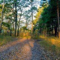 Осеннее солнце в лесу :: Юрий Стародубцев
