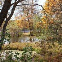 Осенняя  прозрачность :: Ната Волга