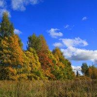 Солнечная осень. :: Марина Шубина
