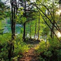 Пробилось солнце сквозь листву :: Наталья Юрова