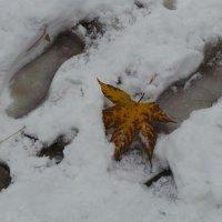 Нежданный снег :: Валентина Юшкова