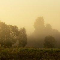 В тумане :: Александр