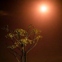 ,,Кровавая луна,, ночь 28.09.15 :: Ринат Валиев