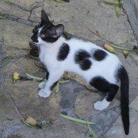Котёнок :: Larisa
