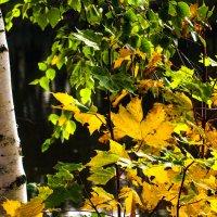 Осенний этюд :: Виталий