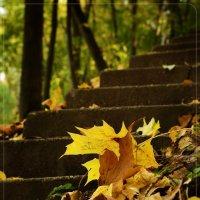 снова осень...... :: Юрий Сидоров