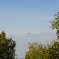 С высоты птичьего полёта :: Ольга