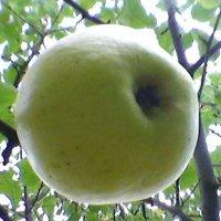 В моём саду... :: Миша Любчик