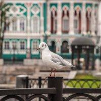 Чайка :: Михаил Вандич