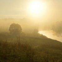 Утро...туман... :: Галина Кучерина