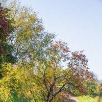 Осенняя дорожка :: Николай Полыгалин