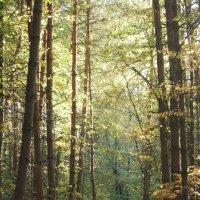 тёплый Осени свет... :: mirtine