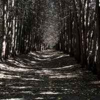 Свет в конце тоннеля :: ФотоЛюбка *