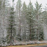 Вот  и  первый  снег ... :: Алексей Рыбаков