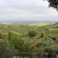 Тосканский пейзаж :: svetlanavoskresenskaia