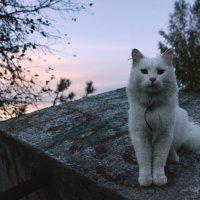 кот и закат :: Анастасия Гуляева