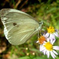 Тепло,светло и бабочки летают! :: Наталья