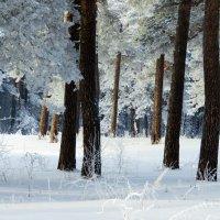 Зимним утром :: Таня Аверина