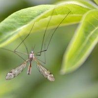 Лист и насекомое :: Николай Ярёменко