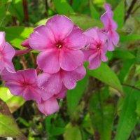 Цветы в  поле. :: Татьяна ❧