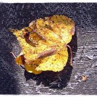 Осень :: muh5257