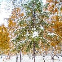 первый снег в Иркутске :: Иван