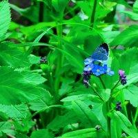 как цветочек голубой :: vg154