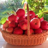 Яблочки :: Mariya laimite