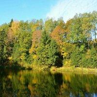 Зеркальное отражение красок осени :: Милешкин Владимир Алексеевич